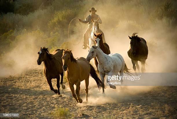 Cowboy poursuivre chevaux sauvages au Desert