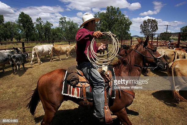 US cowboy Ezra Cooley lends a helping hand herding cattle on a property in Currabubula ahead of attending the Tamworth Country Music Festival on...