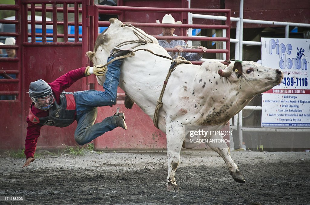 A cowboy falls from a bull during 'Battle of the Beast' bull riding competition at J Bar W ranch in Union Bridge, Maryland, on July 20, 2013. Professional bull riding is one of the most dangerous, fastest growing extreme spectator sport going across America.