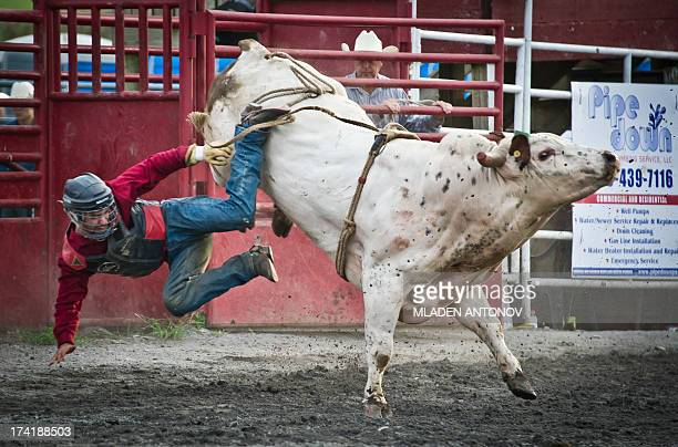 A cowboy falls from a bull during 'Battle of the Beast' bull riding competition at J Bar W ranch in Union Bridge Maryland on July 20 2013...