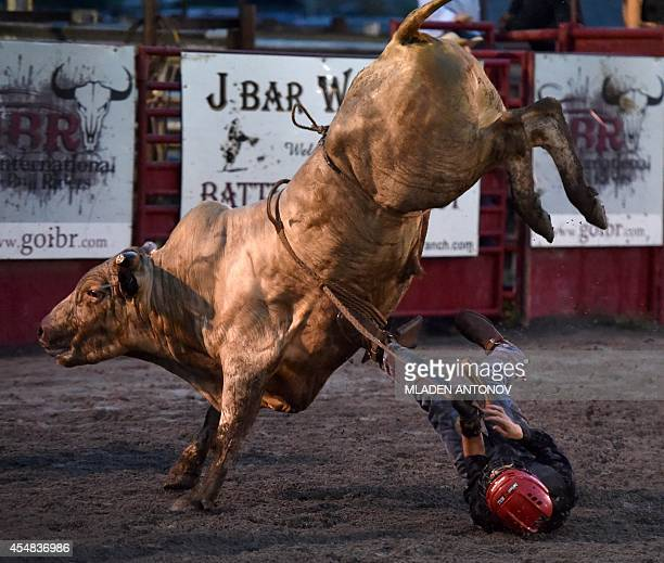 A cowboy falls from the bull during the 'Battle of the Beast' bull riding competition at J Bar W ranch in Union Bridge Maryland on September 06 2014...