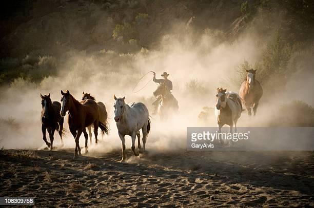 Cowboy Mener un troupeau de chevaux de course-rétroéclairé fond de poussière