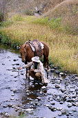 Cowboy Leading Horse to Fresh Water