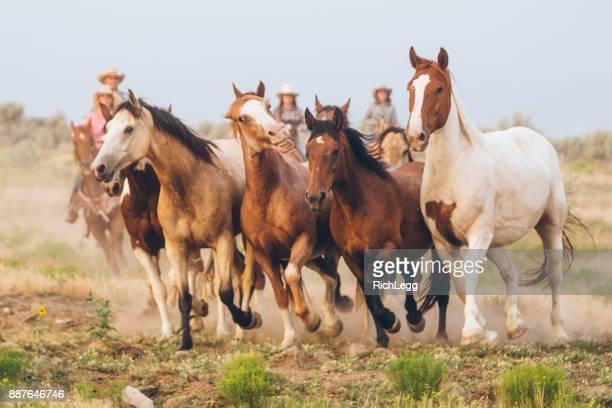 Vie de cow-boy dans l'Utah