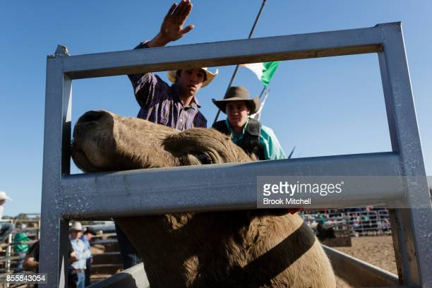 A cowboy prepares to ride at the Deni Rodeo during the 2017 Deni Ute Muster on September 30 2017 in Deniliquin Australia The annual Deniliquin Ute...