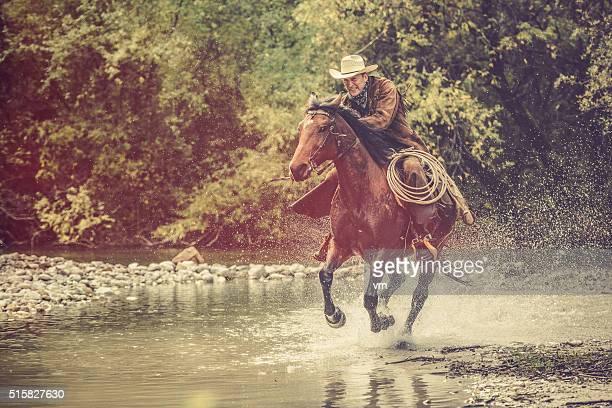 Cheval de cow-boy sur une rivière dans la forêt