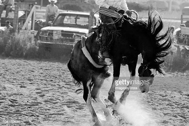 Équitation cheval de cow-boy de rodéo, noir et blanc