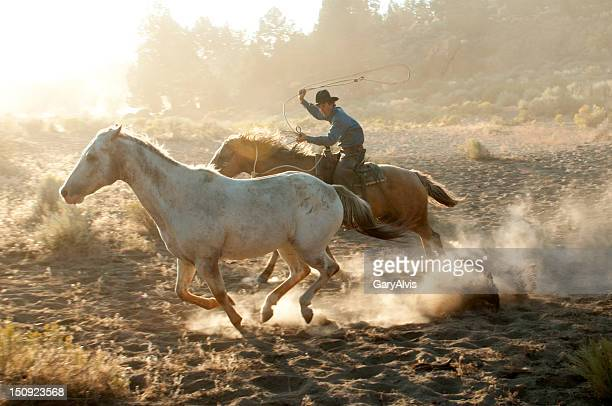 Cowboy roper on running horse chasing a mustang-backlit dust