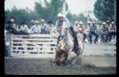 A cowboy ropes a stowe July 24 1974 at the 78th Annual Cheyenne Frontier Days in Cheyenne WY The first Frontier Days was held in 1897 and saddle...