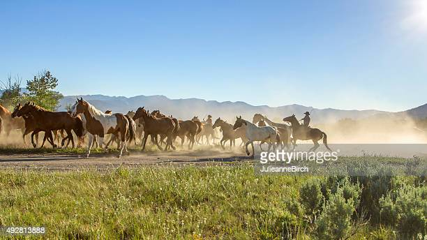 Cowboy running with the horses