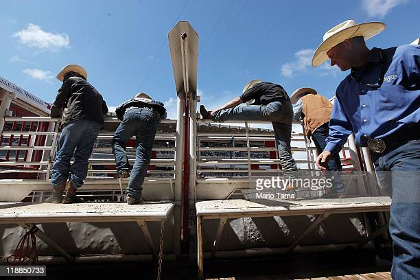 A cowboy stretches during the rodeo at the Calgary Stampede on July 11 2011 in Calgary Alberta Canada The ten day event drawing over one million...