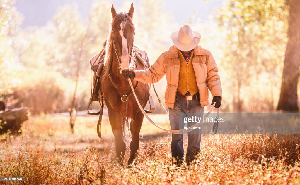 Cowboy walks  with head down guiding horse through golden field : Stock Photo