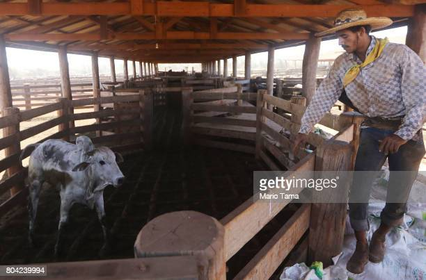 Cowboy Wellington works in the corrall at a cattle feed lot in the Amazon on June 28 2017 near Chupinguaia Rondonia state Brazil The confinement farm...