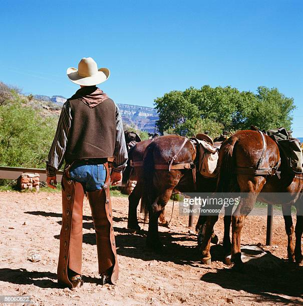 Cowboy with mules or horses