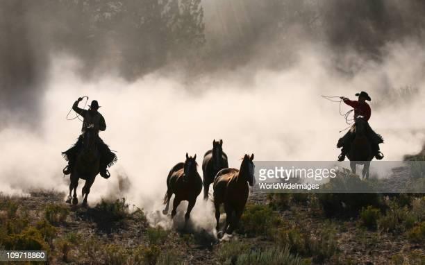 Cowboys et wranglers Série 3