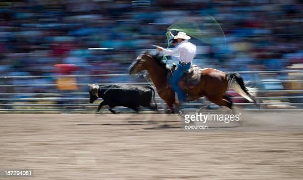 Cowboys de veaux au lasso à un rodéo dans le Montana