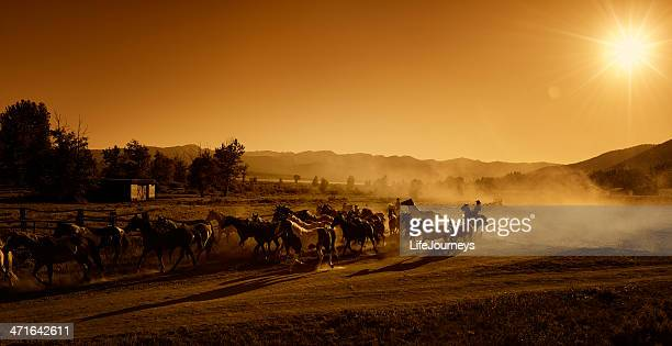 Cowboys Driving the Horses to Pasture At Dusk - Sunset