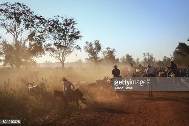 Cowboys herd bulls at a cattle feed lot in the Amazon on June 28 2017 near Chupinguaia Rondonia state Brazil The confinement farm currently holds...