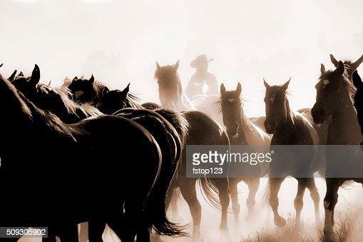 Cowboys: Male wrangler herds horses. Horseback riding. Ranch life. Sepia.