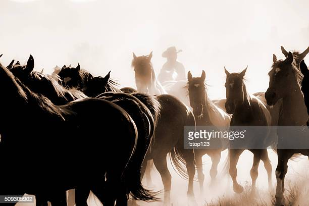 Cowboys: Male wrangler herds horses. Horseback riding. Ranch life. Sepia.
