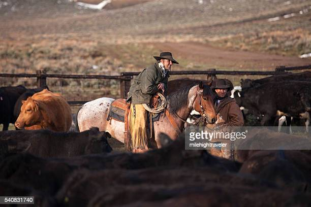 Cowboys spring horseback cattle roundup North Park Colorado