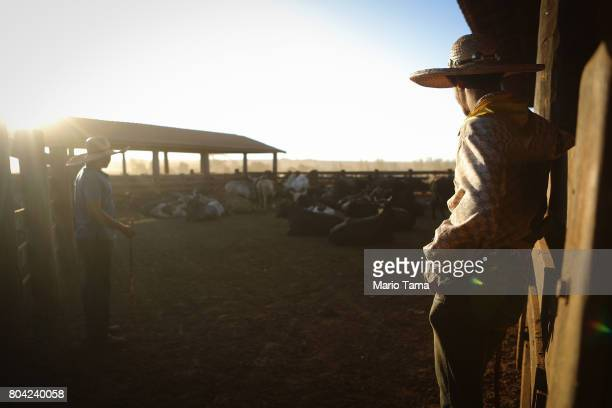Cowboys stand by bulls at a cattle feed lot in the Amazon on June 28 2017 near Chupinguaia Rondonia state Brazil The confinement farm currently holds...