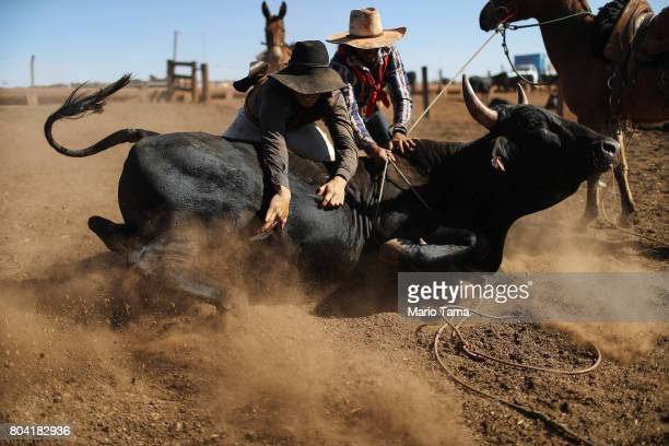 Cowboys wrestle a bull before giving it an injection at a cattle feed lot in the Amazon on June 28 2017 near Chupinguaia Rondonia state Brazil The...
