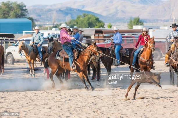 Cowboys Wrestling and Tying Steers at a Rodeo