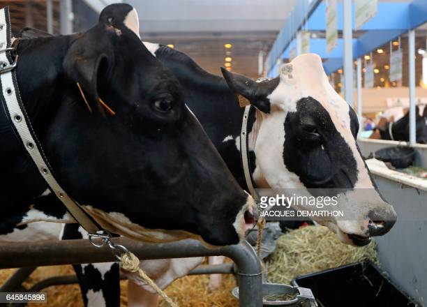 Cows are pictured on February 27 2017 at the Agriculture Fair in Paris / AFP PHOTO / Jacques DEMARTHON