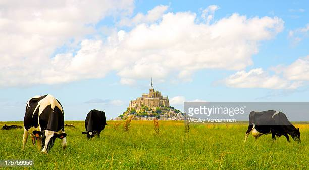 CONTENT] Cows in front of the Mont Saint Michel France