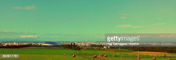Cows In Pasture, City In Background