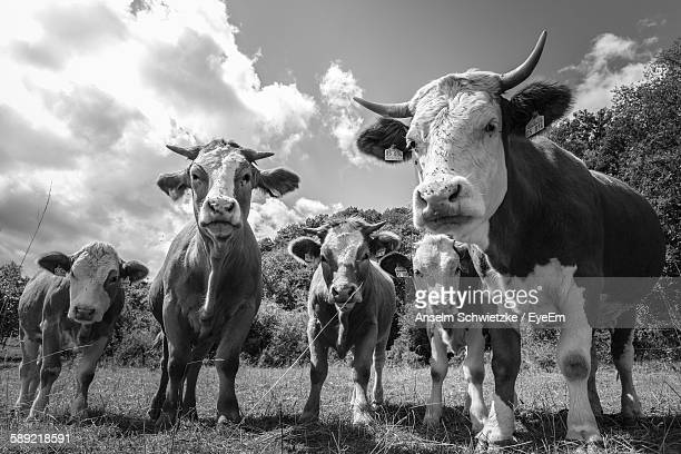Cows Standing On Grassy Field Against Sky