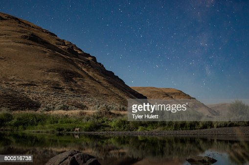 Coyote under the stars on a riverbank : Stock Photo