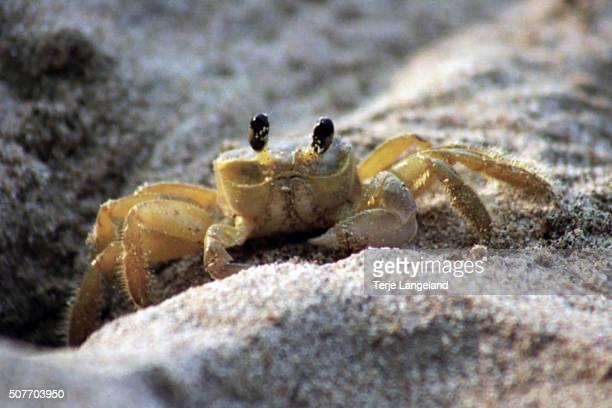 Crab on beach at Cahuita, Costa Rica