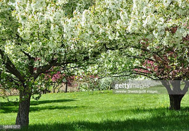 a personal memory about a crabapple tree Donor programs 1 plant a tree here is anniversary or to honor the memory of a loved oneplant a tree norway maple, linden, pin oak, red oak, crabapple.