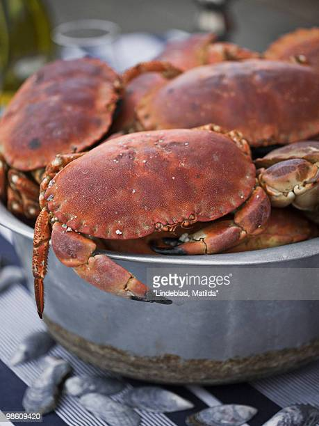 Crabs in a saucepan, close-up, Sweden.