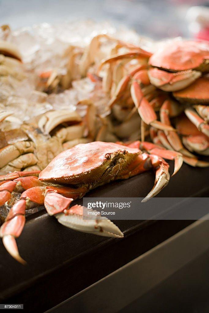 Crabs : Stock Photo