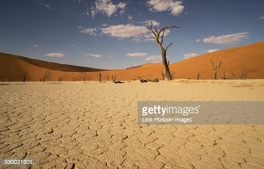 Cracked clay pan and group of distant dead trees, Deaddvlei, Sossusvlei National Park, Namibia