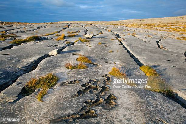 Cracks in rock slabs of the Burren, near Fanore