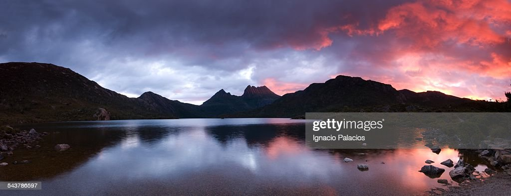 Cradle Mountain vegetation, Overland Track : Stock Photo