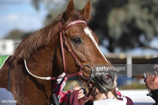 Crafty Devil wins the Mildura Truck Centre â Isuzu BM64 Handicap at Mildura Racecourse on July 31 2017 in Mildura Australia