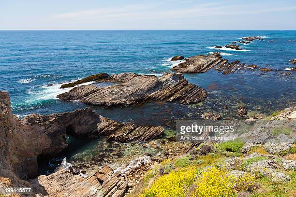 Craggy coastline with wildflowers