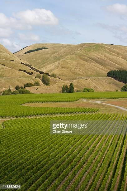 Craggy Range and Te Muna road vineyard.