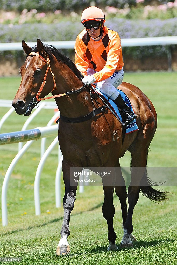 Craig Newitt riding Clevadude after winning the Sportingbet Plate during Melbourne racing at Moonee Valley Racecourse on December 29, 2012 in Melbourne, Australia.