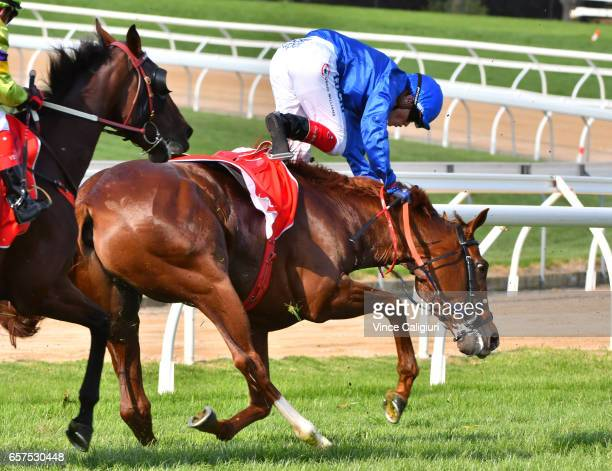 Craig Williams riding The Gold Trail for the Godolphin stable comes off after the winner post in Race 7 Ladbrokes Mornington Cup during Ladbrokes...