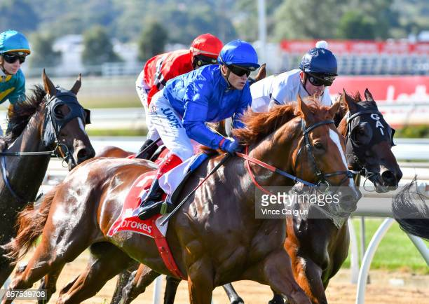 Craig Williams riding The Gold Trail for the Godolphin stable during the first lap before coming off after the winner post in Race 7 Ladbrokes...