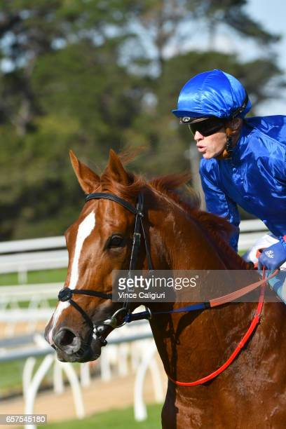 Craig Williams riding The Gold Trail for the Godolphin stable on the way to the start before coming off after the winner post in Race 7 Ladbrokes...
