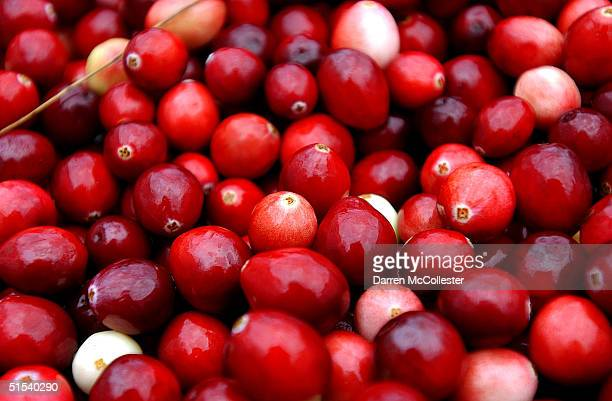 Cranberries are harvested at Weston Cranberry Farm October 22 2004 in Carver Massachusetts Most of the worlds cranberries are harvested on 37...