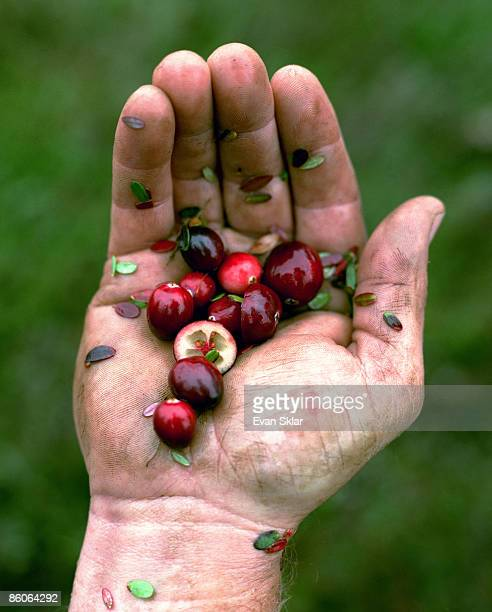 Cranberries in Hand