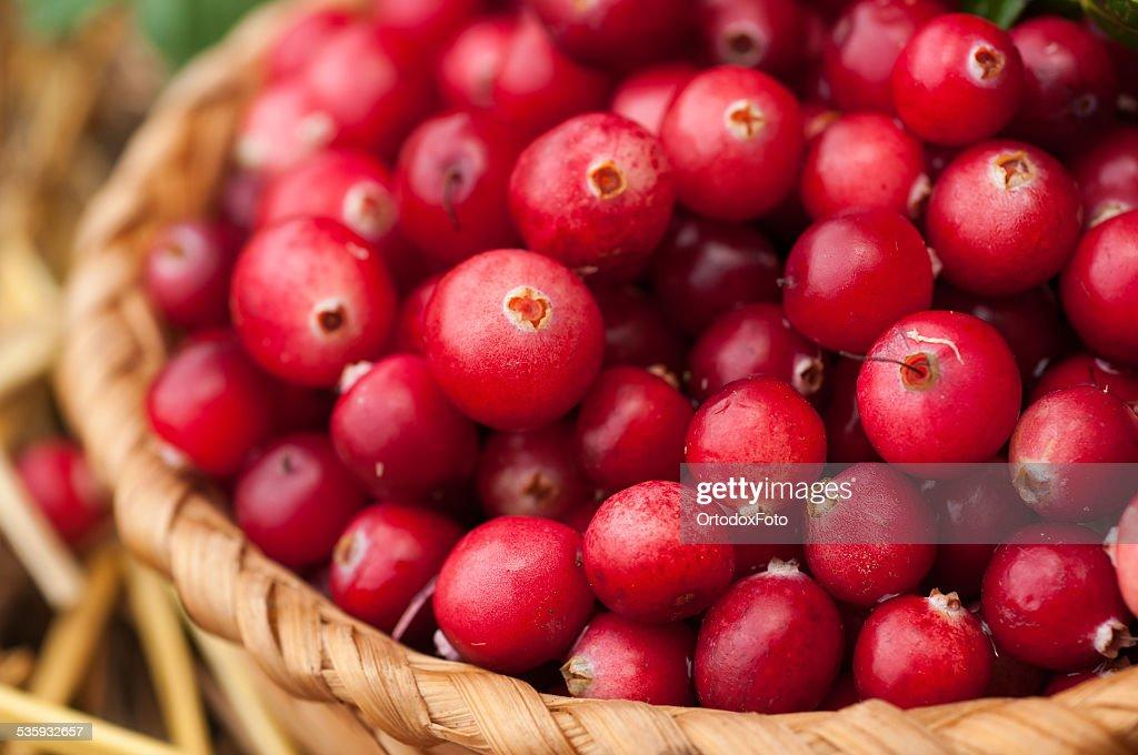 cranberries : Stock Photo